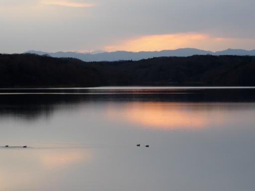 20170218・三寒四温散歩・マガモの湖06