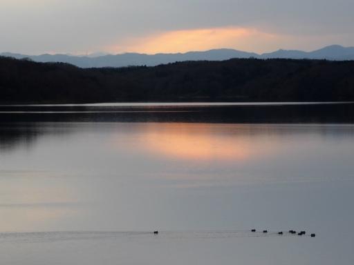 20170218・三寒四温散歩・マガモの湖10