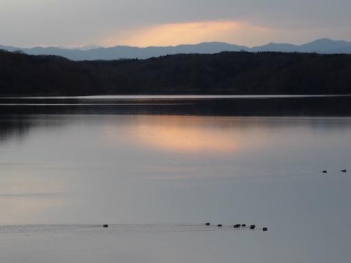 20170218・三寒四温散歩・マガモの湖09