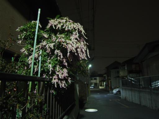 20170305・日没後の空22