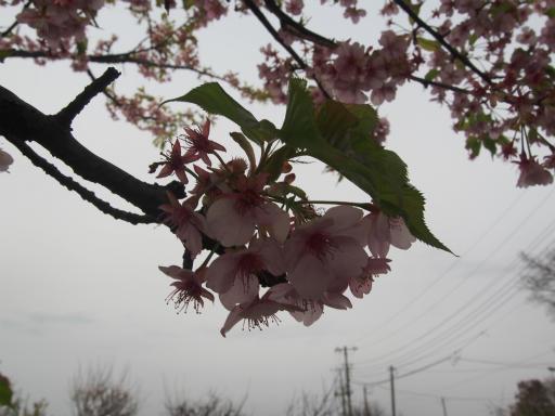 20170318・3月中旬の狭山湖10