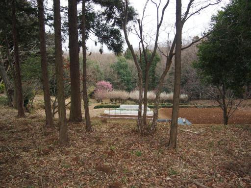 20170318・3月中旬の狭山湖24