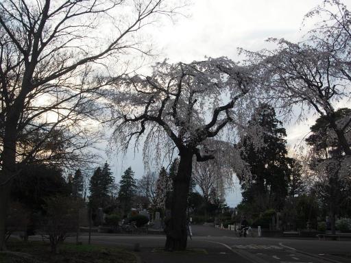 20170402・多磨霊園1-19