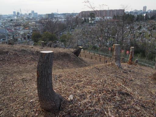 20170402・多磨霊園2-06