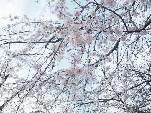 20170402・多磨霊園空03