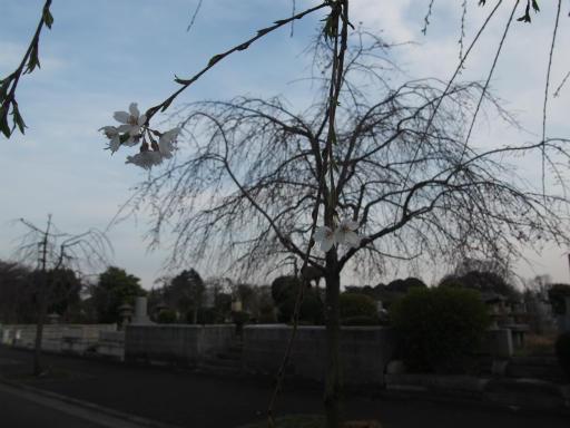 20170402・多磨霊園空08