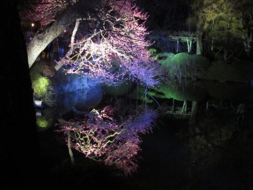 梅・夜・祭0001_1
