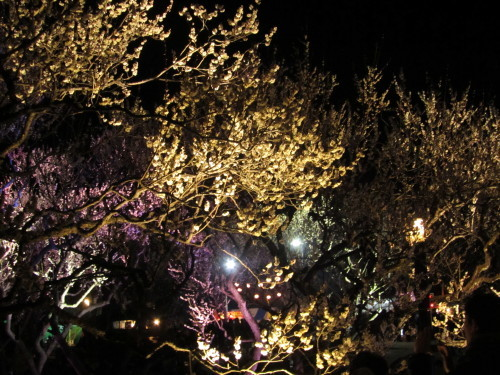 梅・夜・祭0001_2
