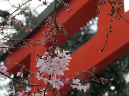 平野神社0001