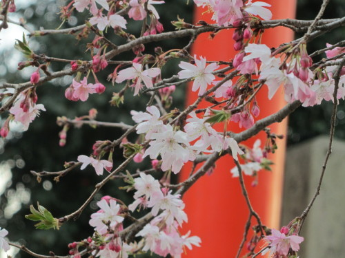 平野神社0001_1