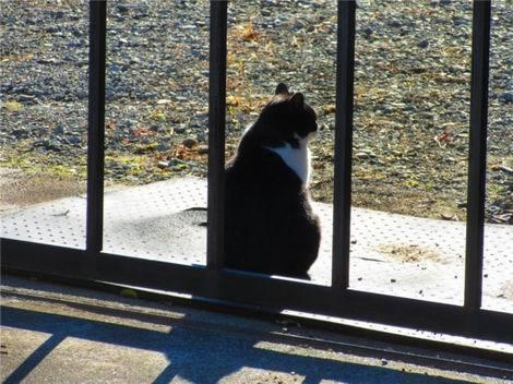 日向ぼっこの猫(470x352)