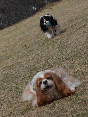 ざぶとん犬2
