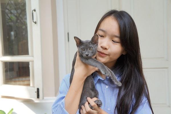 korat cat kitten コラット1