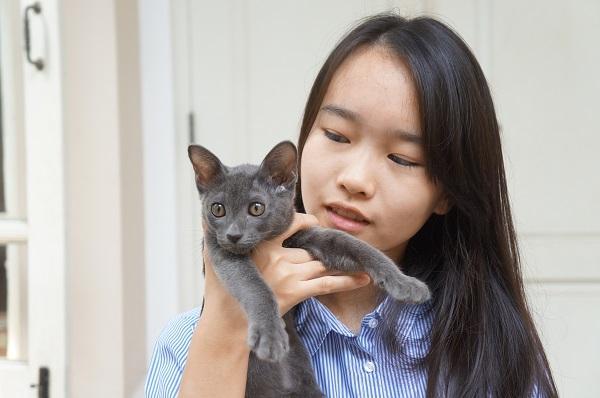 korat cat kitten コラット2