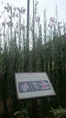 植物園18