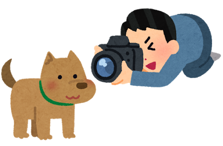 カメラ、犬、撮影