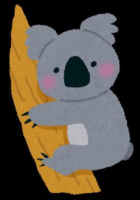 動物、コアラ