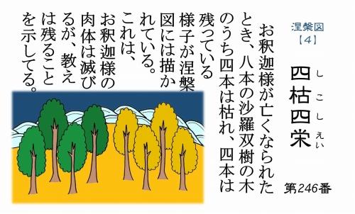500仏教豆知識シール246 四枯四栄 沙羅双樹
