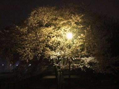 1空堀川夜桜0408