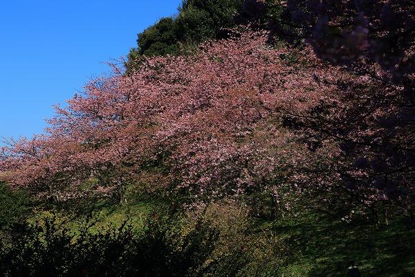 藤山健康文化公園 170219 01