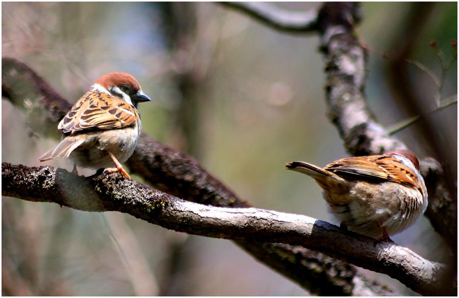小鳥・助手2