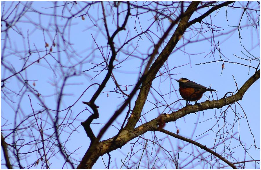 小鳥・助手3