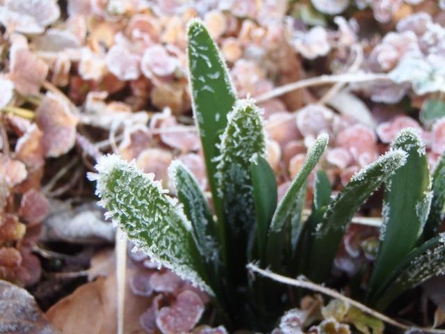 霜の朝220170308