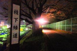 桜1 (3)