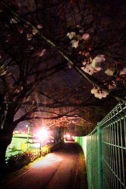 桜1 (4)