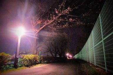 桜1 (5)