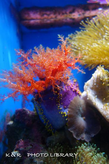 2016年6月25日沼津港深海水族館・アデヤカキンコ5
