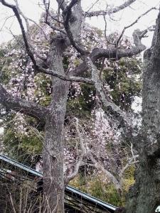 北鎌倉東慶寺