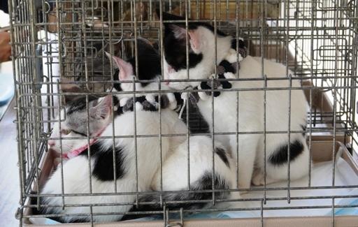 P1080515 白黒3猫