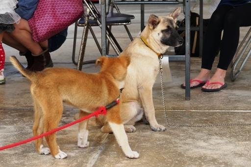 P1080510 2子犬