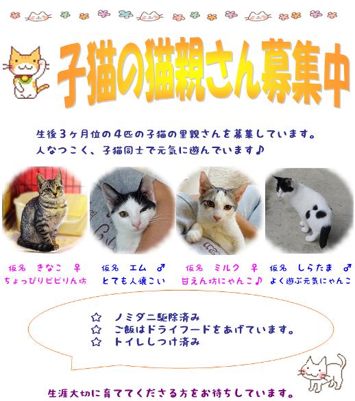 募集チラシ 4猫 - コピー