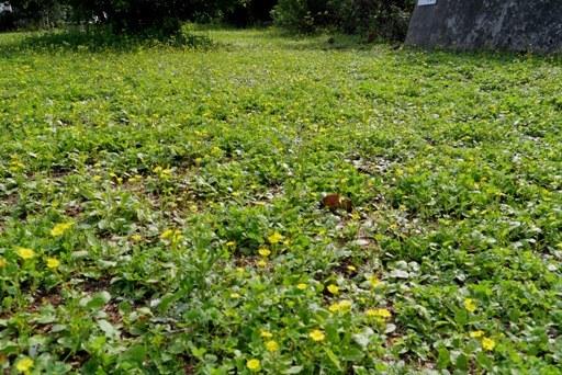 公園野花k P1080767