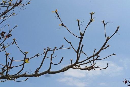 春落葉-d P1090392