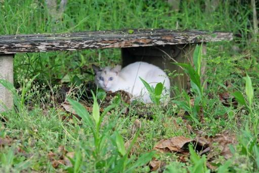 大雨公園ベンチ猫 P1100191