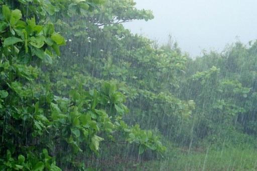 大雨土砂降り P1100206