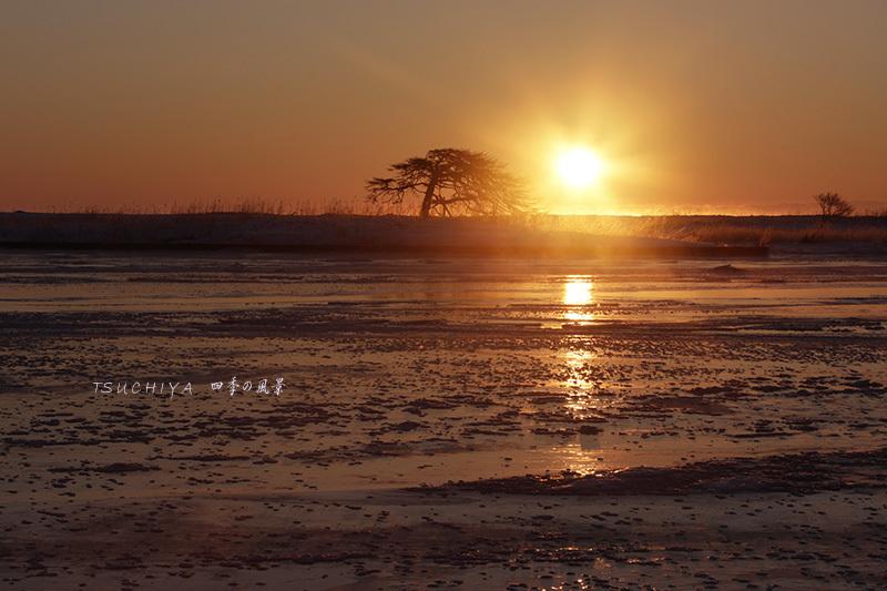 松と太陽 2