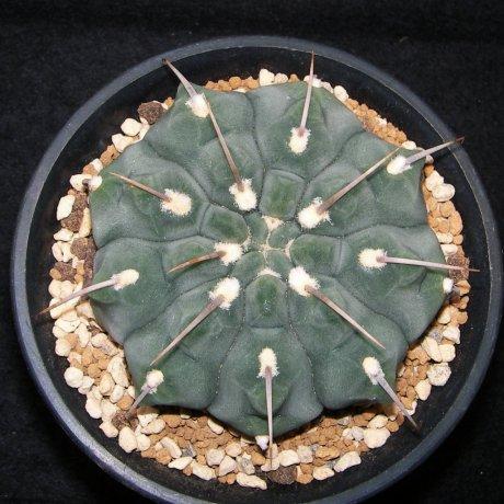 Sany0133vatteri--LF 96--CCB seed