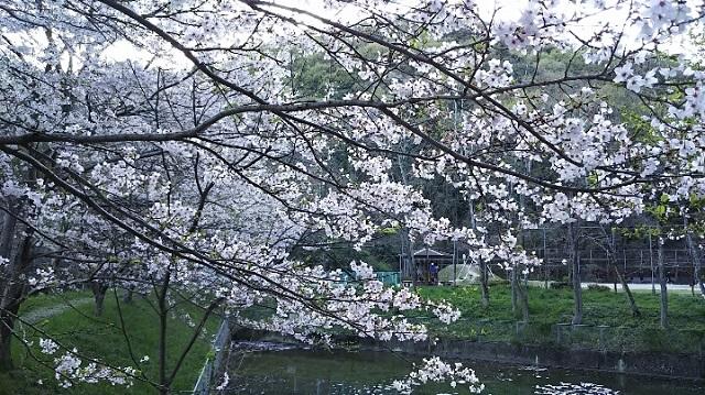 170412 龍ノ口山⑫ ブログ用
