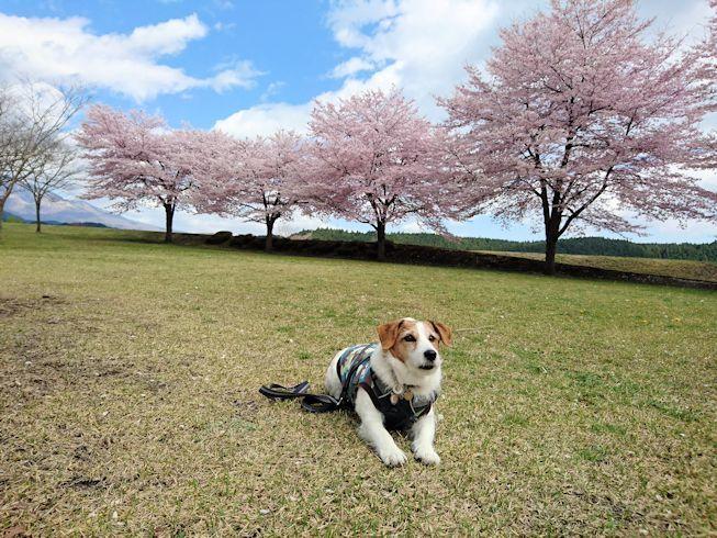 2017日光だいや川公園007
