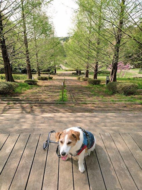 2017長岡公園097