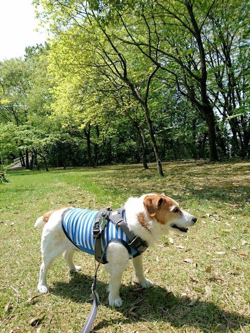 2017散歩092