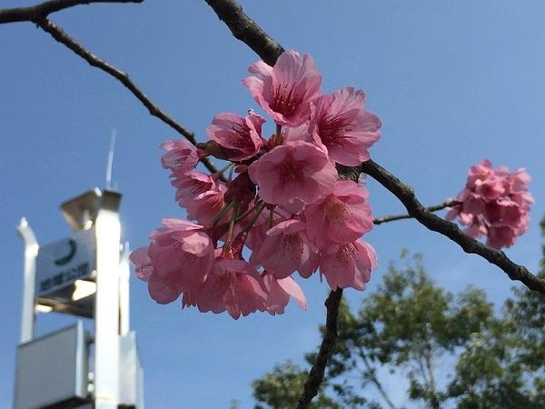 吉備中央公園のポケストップの1つ、地域公団のモニュメントと山桜