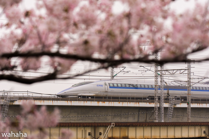 290408ichikawa-1.jpg