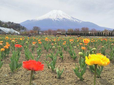 オレンジの花と富士山