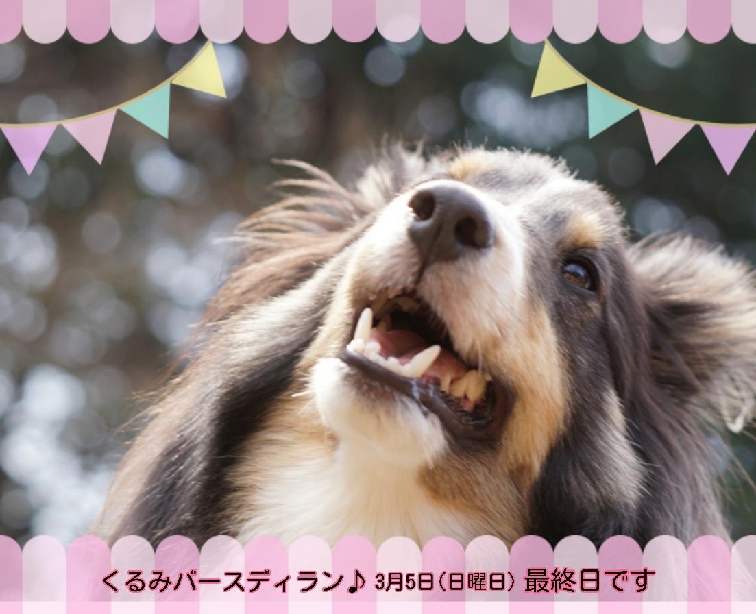 17-03-05-17-04-23-552_deco.jpg