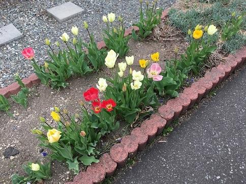 我が家をのミニ花壇